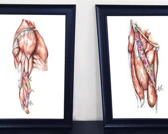 Medical Anatomy Art- Watercolour PRINT- Flower Thigh and Arm SET