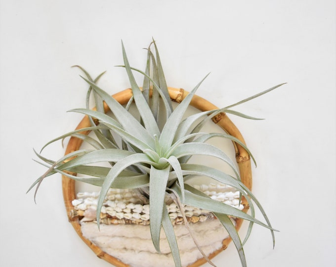 handmade wall hanging air plant holder fiber art / gift for gardener