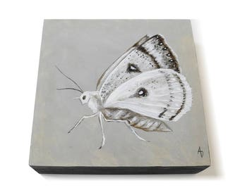 White Moth painting 6x6 - monochrome artwork - entomology art - white butterfly - insect art - original painting square - black and white