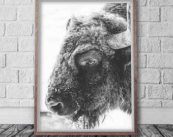 Buffalo Print, Instant Art, Bison Wall Art, American Bison, Black And White, Boho Decor, Animal Photography, Digital Download, South western