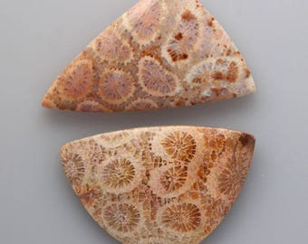 Fossil Coral cabochon set