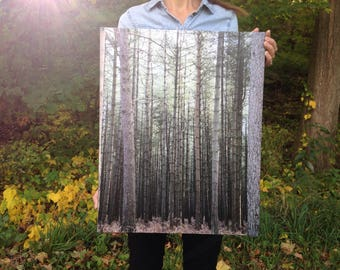 Nature Photography on Canvas- Towering Pine Trees in Thetford Forest, England- travel photo wrapped wall canvas, Wall Art