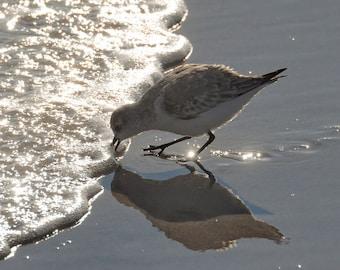 Coastal Wall Art, Bird Photography, Ocean Photograph, Neutral Beach Art, Seashore Photo, Shorebird on Beach, Beach House Decor, Sandpiper