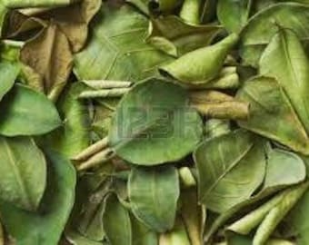 Organic Kaffir Lime Leaves Leaves