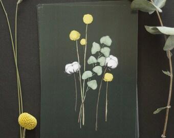 "Postcard - botanical drawing - flower - eucalyptus - craspedia - coton flower - bohemian - ""Flora Black"""