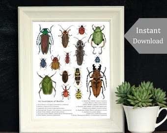 Printable Educational Art - A4 and 8 x 10 - An Assortment of Beetles, Montessori, Science, Insects, Nature Study, Entomology