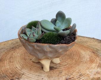 Wonky Tripod Planter - Handformed Ceramics - Kusamono, shitakusa pot - Succulent or Cactus Planter - Wabi Sabi Pottery - Ready To Ship