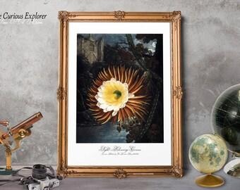 Botanical Decor, Cactus Print, Flower Illustration, Gift for Woman Print, Cactus Home Decor, Cactus Florals Decor, Blossom Art Decor - E9g16