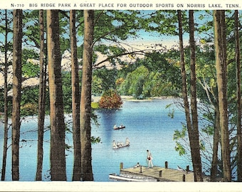 Norris Lake, Tennessee, Big Ridge Park, Swimming - Postcard - Vintage Postcard - Unused (UU)