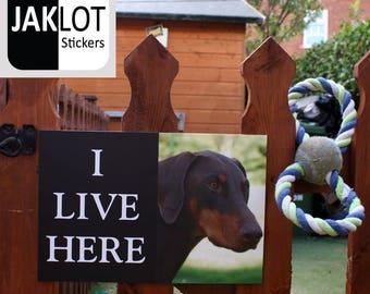 DOBERMAN - I Live Here, Dog Warning Outdoor / Indoor Gate Fence Wall Sign