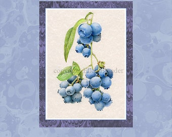 Blueberry Colored Pencil Study, Large Giclee Print