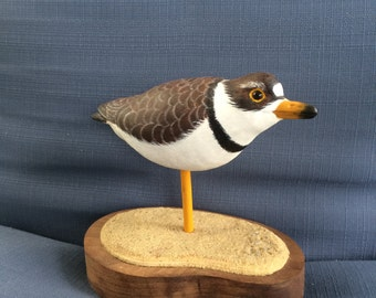 Semipalmated Plover Shorebird
