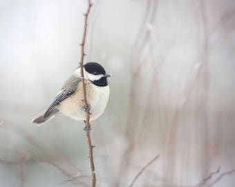 Bird Photography, Chickadee Photo or Canvas , Winter, Snowbird, Winter Print, Wall Art, Nature Photograph, Animal Decor - Chickadee in Snow