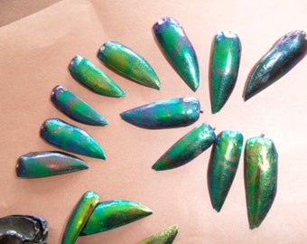 2 wings of beetles, beautiful iridescent patterns and designs! rare.