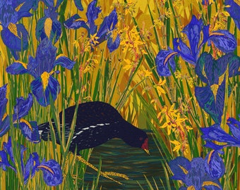 Moorhen Bird Art Print (Loose Print), British Birds Print, Bird Lover Gift, Bird Print, Wildlife Art, Nature Art, 8 x 8/12 x 12/16 x 16