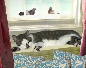 Cute Cat,Note Card Set, Blank Notecards, Note Card Stationery, Cat Lovers, Photo Notecards, Deborah Julian