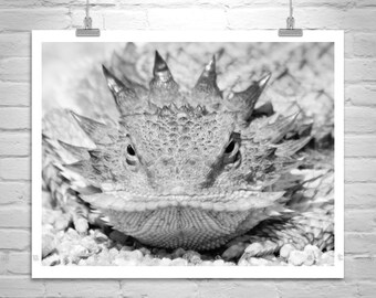 Horned Lizard Photograph, Horny Toad Picture, Reptile Art, Horned Toad, Desert Lizard Picture, Black and White, Reptile Photography