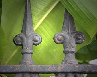 Fleur in de Leaves- 8x8 fine art photography- New Orleans Collection
