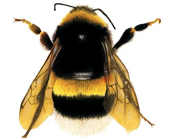 Bee Illustration - Save The Bees - Archival Print - 8x11