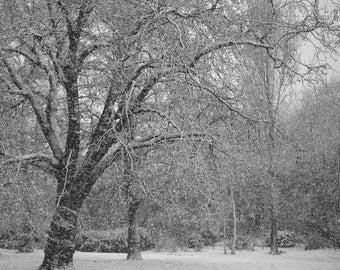 Winters tree -  fine art monochrome photography
