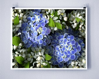 BLUE HYDRANGEA - 8x10 Signed Fine Art Photograph