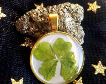 Rare Real Five Leaf Clover Pendant. found in nature #2