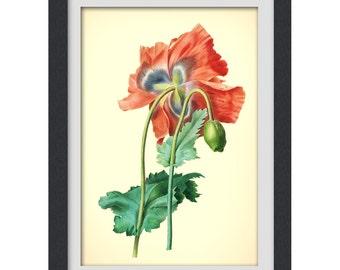 Botanical Print, Redoute art, Floral Printable orange flower, 8x11 botanical art print from a vintage book plate. #INSTANT DOWNLOAD 28