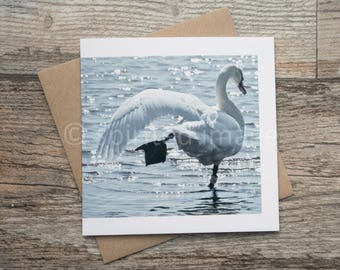 PERFECT BALANCE, Mute Swan, Art Card, Greeting card, bird photography, peaceful waters.
