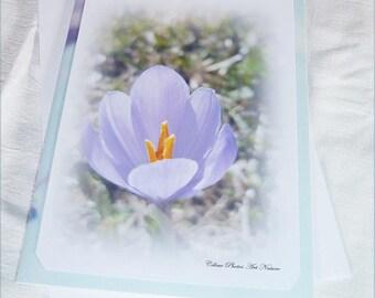 """Carte double """"Joli crocus"""" de Céline Photos Art Nature"""