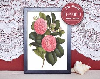 "Vintage illustration of Camellia - framed fine art print, flower art, home decor 8""x10"" ; 11""x14"", FREE SHIPPING - 245"