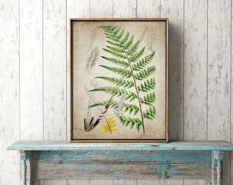 Fern Print - Fern Illustration - Fern Art - Fern Botanical Illustration - Digital Art - Printable Art - Single Print #91 - INSTANT DOWNLOAD
