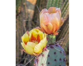 Cactus Flower Art Print,Desert Photography, Flowering Cactus, Desert Decor, Nature Art Print, Southwest Photo Art, Desert Art Photo