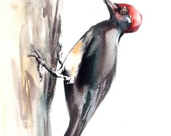 Woodpecker bird fine art print, bird watercolor painting art, bird art, black bird wall art print, watercolor print of bird
