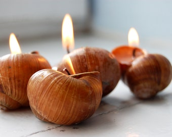 Hygge Home Decor - Mother's Day Gift - Scented Candles - Snails Shell Candles - Handmade Eco friendly Candles, Set of 6 - Little Luxuries