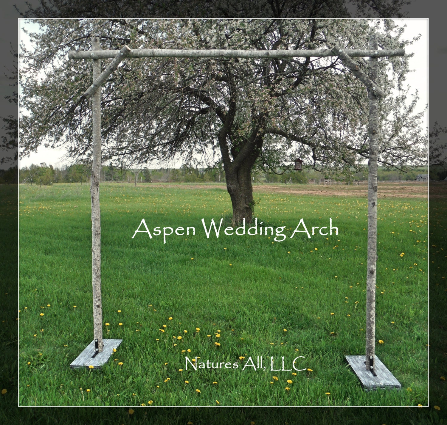 Aspen wedding archaspen arborrustic aspen wedding zoom junglespirit Choice Image