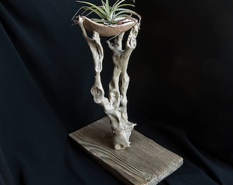 Driftwood / Barnwood / Clay Dish Air Plant Display