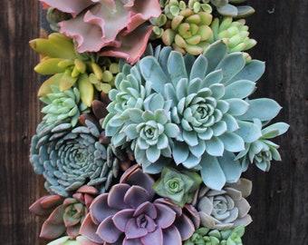 "15.5"" x 7"" Custom Rectangle Succulent Vertical Garden Made to order"