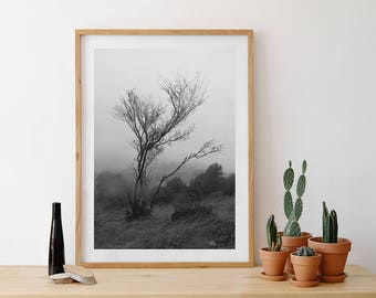 Tree, minimalism, minimalist photography, photography in black and white, photography nature photography