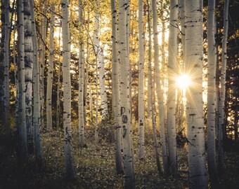 Aspen Trees, fall tree art, Colorado art, sunstar, rustic wall art, cabin decor, sunset aspens photo, fall photo | Evening Aspen WoodsH