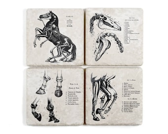 Horse Anatomy Vintage Illustration Coasters, Set of 4