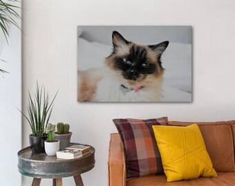 Ragdoll Cat canvas (60cm x 40cm)