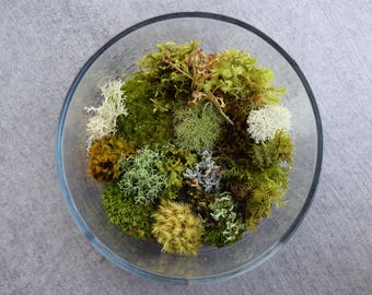 Bonsai Moss Variety Pack! (For Terrariums, Bonsai, Fairy Gardens)