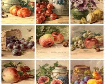 Vintage Catherine Klein Fruit Illustrations Digital Graphics Collection, Art, Altered Art, Prints, Scrapbook, and more  Instant Download JPG
