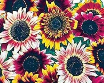 ASU)~BOHEMIAN RHAPSODY Mix Sunflower~ Seeds!!!~~~A Sunflower Rainbow!