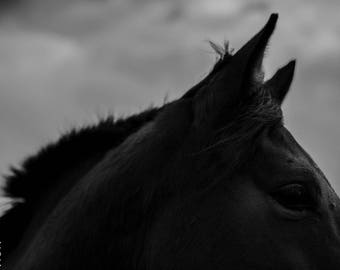 Black Horse 1 // PHOTO Print on glossy photo paper or  Dibond 3 mm // Photography // animal // horse
