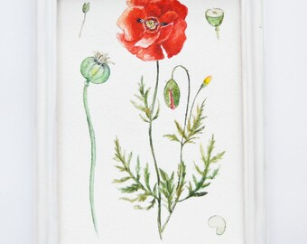 6x8 watercolor| Poppy painting| Botanical illustration| Flower painting| Watercolor flower illustration| Small painting| POPPY