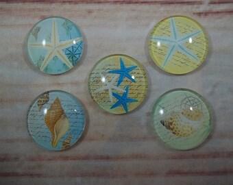 Seashell Fridge Magnets, Glass Kitchen Magnets, Set of 5, Kitchen Decor, Hostess Gift, Housewarming Gift, Office Decor, Locker Magnet