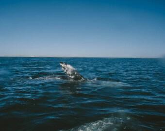 Whale Adventure Photo