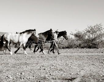Walking My Horses