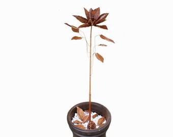Copper Magnolia Tree